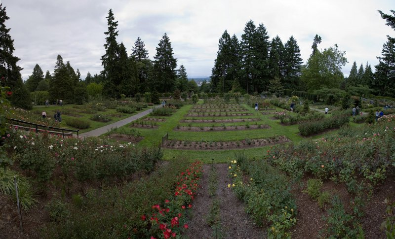 A panoramic view of the International Rose Test Garden