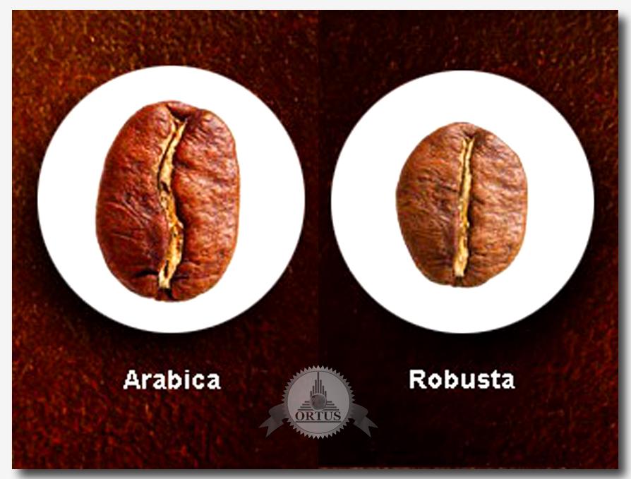 Обзор сортов и цен на кофе в зернах проводит специалист информационного торгового портала Ортус Глобал: https://ortus-global.com/blog/analiz-sortov-i-tsena-kofe-v-zernakh