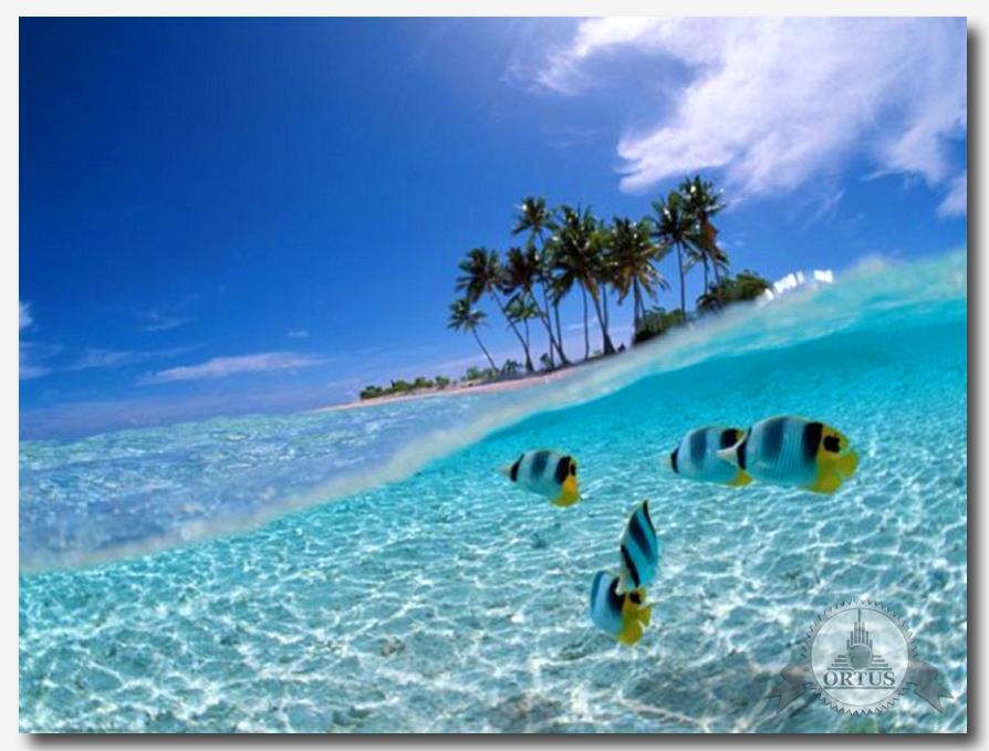 Про отдых на Барбадосе рассказываетинформационный портал: https://ortus-global.com/blog/otdykh-na-karibakh