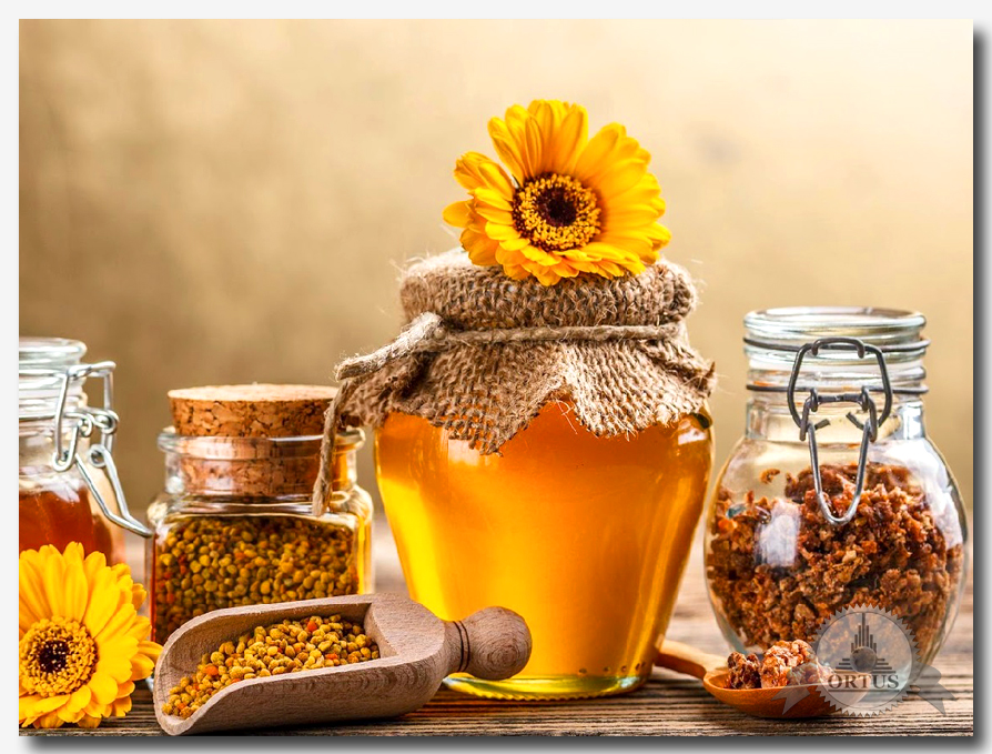 О полезных свойствах мёда подробно на портале ortus global