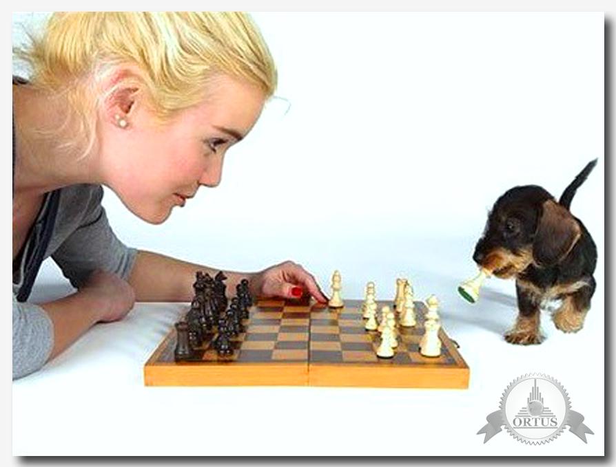 О методах как научиться играть в шахматы и о практической возможности повышать уровень рассказывает специалист информационного портала Ортус Глобал: https://ortus-global.com/blog/shakhmaty-dlya-novichkov