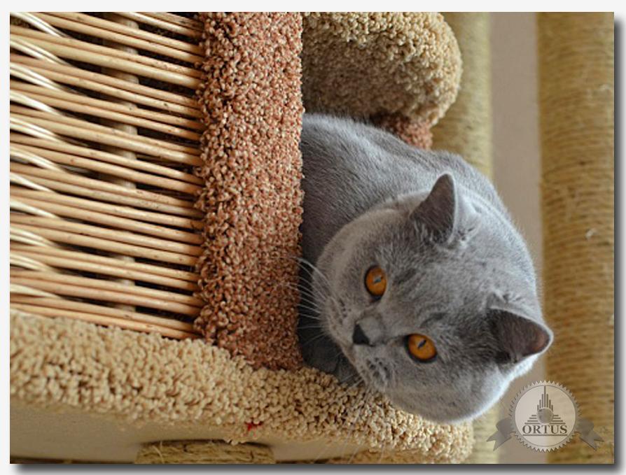 Советы по уходу за котёнком читайте на информационном портале: https://ortus-global.com/blog/sovety-po-ukhodu-za-kotenkom